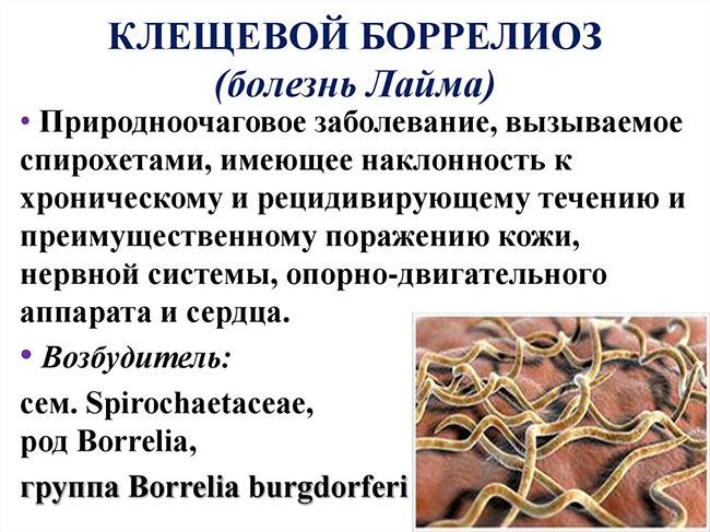 Боррелиоз