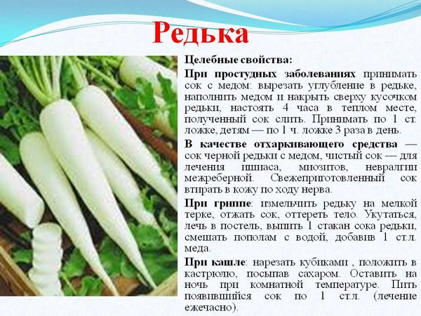 Рецепты редьки при кашле и простуде