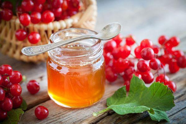 Красная калина с медом при кашле