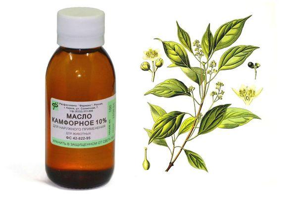 Флакон камфорного масла и растение
