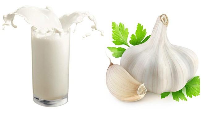 Чем полезен чеснок с молоком