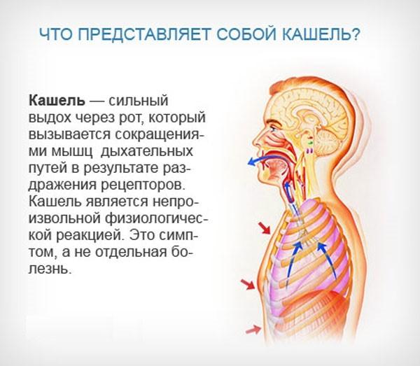 Определение кашля и его основные причины